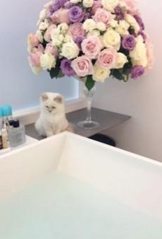 Meet Karl Lagerfeld's New Kitten
