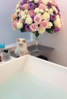 Karl Lagerfeld's Cat Has Two Personal Maids, A Morally Abhorrent Owner