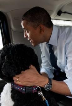 How Anna Wintour Got Wrangled Into 'Bark for Barack'