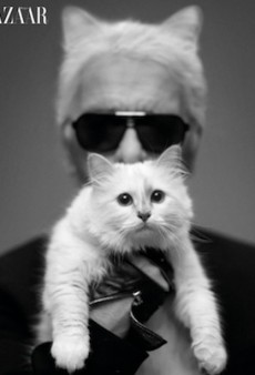 Choupette Looks Miserable in Karl Lagerfeld's Arms