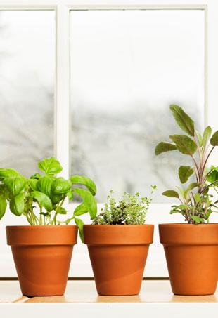 herb-garden-p