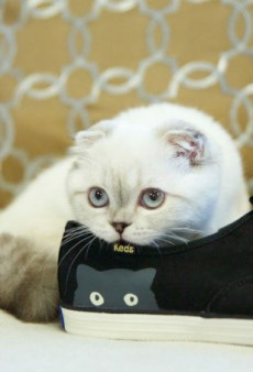 Taylor Swift's Cat, Olivia Benson, Makes Her Modeling Debut for Keds