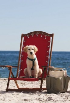 Traveling with Fido? Here Are 6 Hotels with the Best Pet Perks