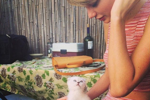 Taylor Swift Pet