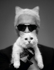 Karl Gets a Kitten