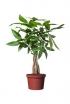 Cohabit with a Plant