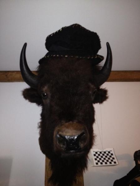 Taxidermy from South Dakota