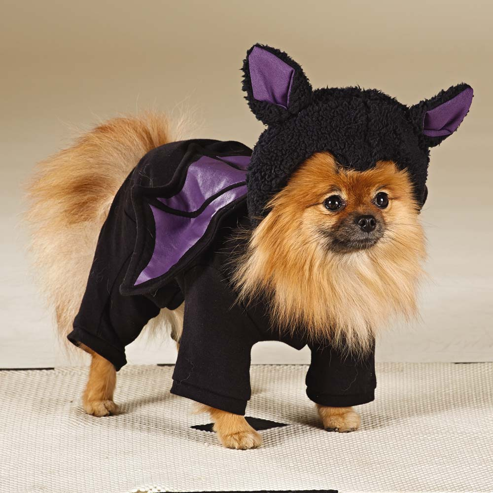 47 halloween costumes for your dog - thefashionspot