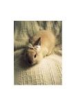 Sweetest Bunny