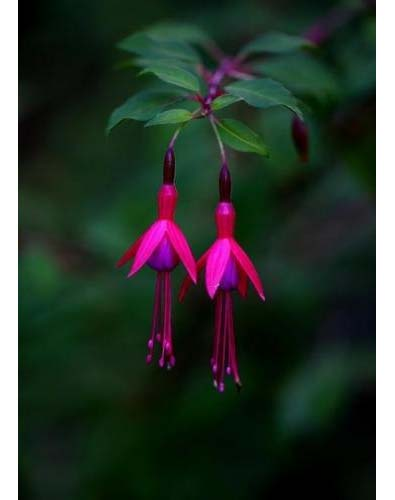 Missing Flora