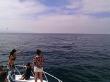 Nicole Scherzinger is a Whale Watcher