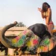 Hilary Rhoda and the Sneezy Elephant