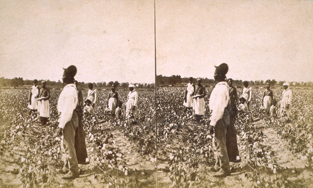 cotton harvest people archives