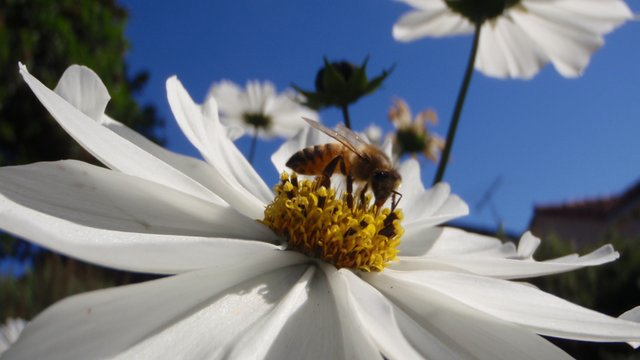The Vanishing of the Bees; Image: Movie Still