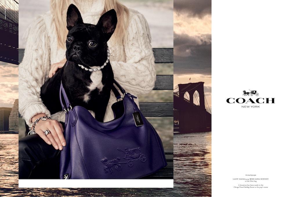 Miss Asia Kinney Lady Gaga dog coach